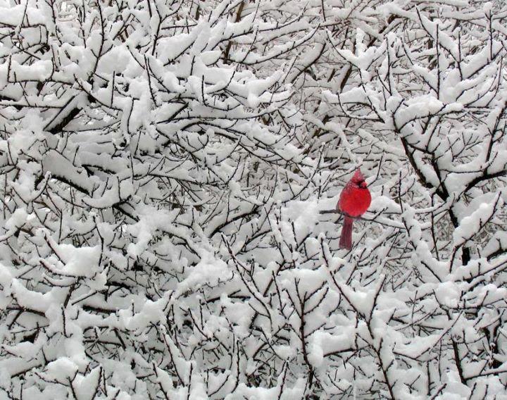 Stunning Winter Scene