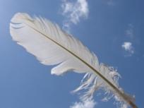 c99eb-white-feather