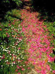 path-of-flower-petals-jeanette-oberholtzer