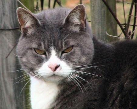 fat-tabby-kitten_w725_h580