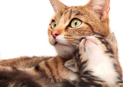 max_400_07_cats-kittens-mothers-day