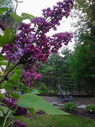 7 Quick  Spiritual GardeningTakes