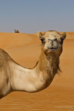 Camels, Jet Planes and the Desert