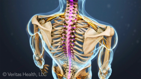 spinal-canal-spinal-cord